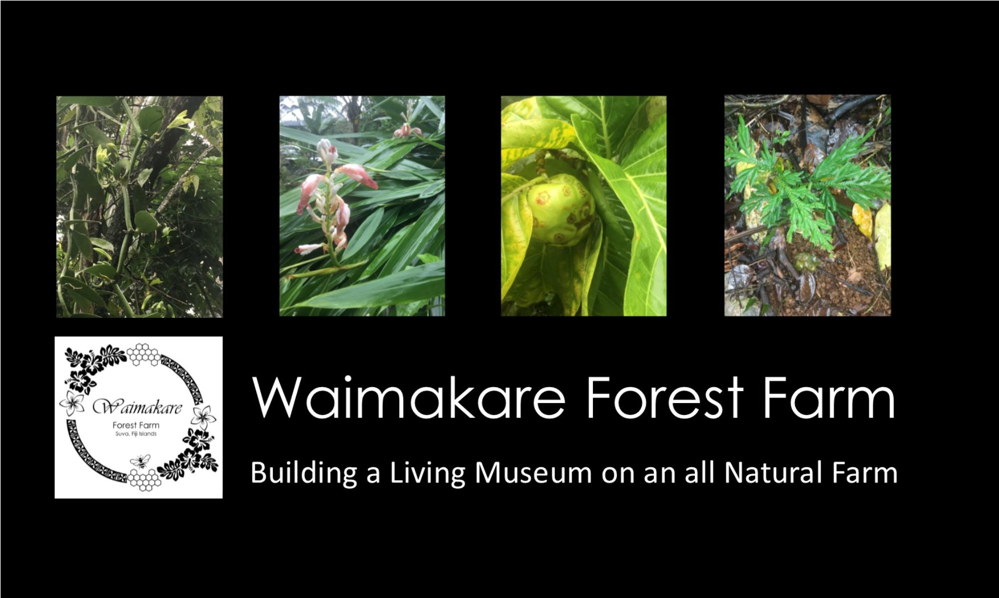 Waimakare Forest Farm